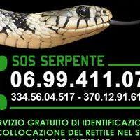 Locandina recupero serpenti