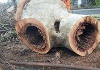 alberi malati abbattuti due